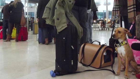 romeo aeropuerto